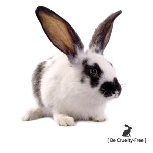 Image from Lush Cosmetics - making cruelty free cosmetics shopping easy!
