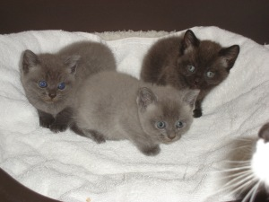 Billie's kittens - now living happily at their new homes.